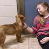 dc.0128.stolen puppy adopted04