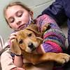 dc.0128.stolen puppy adopted09