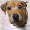 dc.0128.stolen puppy adopted01
