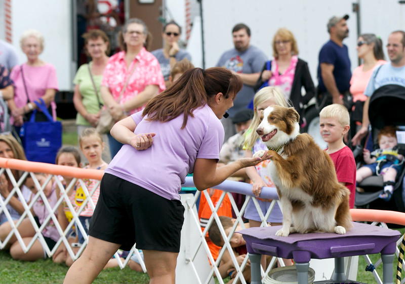 Jonathan Tressler — The News-Herald <br> The Dynamo Dogs' proprietor Gail Mirabella and Glamour, an Australian Shepherd, interact during a performance Aug. 30 - opening day of the 196th Great Geauga County Fair.