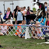 "Jonathan Tressler — The News-Herald <br> Gail Mirabella, far left, who runs The Dynamo Dogs team, watches along with the crowd as K8 (pronounced ""Kate"") catches a disc in mid-air during the 3:15 p.m. presentation by The Dynamo Dogs Aug. 30 during opening day of the 196th Great Geauga County Fair."