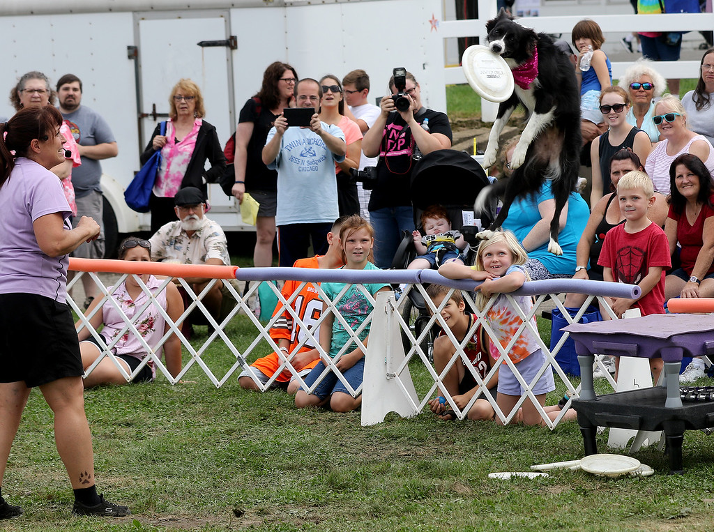 . Jonathan Tressler � The News-Herald <br> Gail Mirabella, far left, who runs The Dynamo Dogs team, watches along with the crowd as K8 (pronounced �Kate�) catches a disc in mid-air during the 3:15 p.m. presentation by The Dynamo Dogs Aug. 30 during opening day of the 196th Great Geauga County Fair.