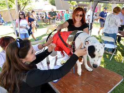 Annual Pooch Parade in Pleasanton
