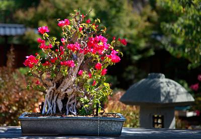 Bonsai Garden feature