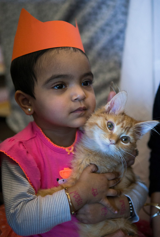 . Laxmi Agarwal, 1, holds a kitten at the Homeless Cat Network\'s cat adoption fair for kids and parents interested in adopting a cat or kitten, at the library in Foster City, Calif., on Saturday, Feb. 1, 2014. (John Green/Bay Area News Group)