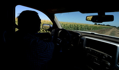 Glenn Stonebarger drives through part of his acreage as crews harvest sweet corn at G&S Farms in Brentwood, Calif., on Friday, June 24, 2016. (Dan Honda/Bay Area News Group)