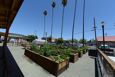 The community garden beds at City Slicker Farms in Oakland, Calif., photographed on Friday, June 24, 2016. This urban farm grows and sells their produce on site in a totally urban setting. (Dan Honda/Bay Area News Group)