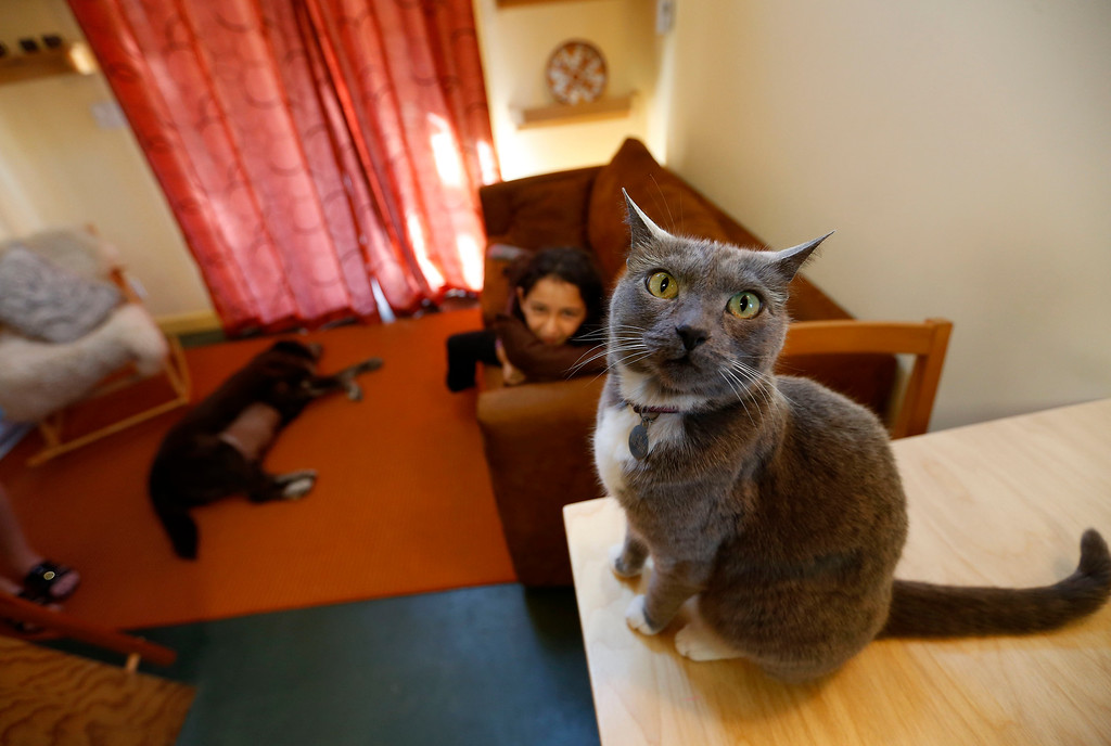 ". Karen Chapple\'s cat K.D., daughter Lexi Chapple, 9, and dog Clay are photographed in Chapple\'s accessory dwelling unit in the backyard of her home in Berkeley, Calif., on Tuesday, July 12, 2016. Chapple is a UC Berkeley professor and affordable housing expert, and had the tiny 400-square-foot ""granny\"" unit built five years ago. (Jane Tyska/Bay Area News Group)"