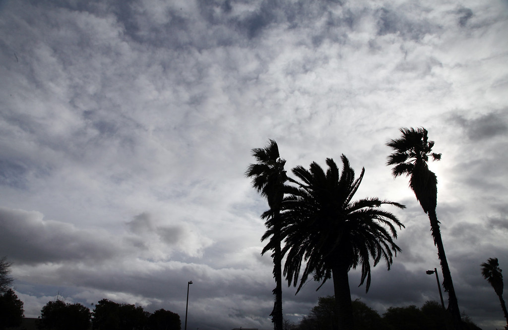 . The wind whips through tall palm trees as the clouds thin to let the sun shine for a moment on Harbor Bay Island in Alameda, Calif. on Friday, Feb. 28, 2014. (Laura A. Oda/Bay Area News Group)