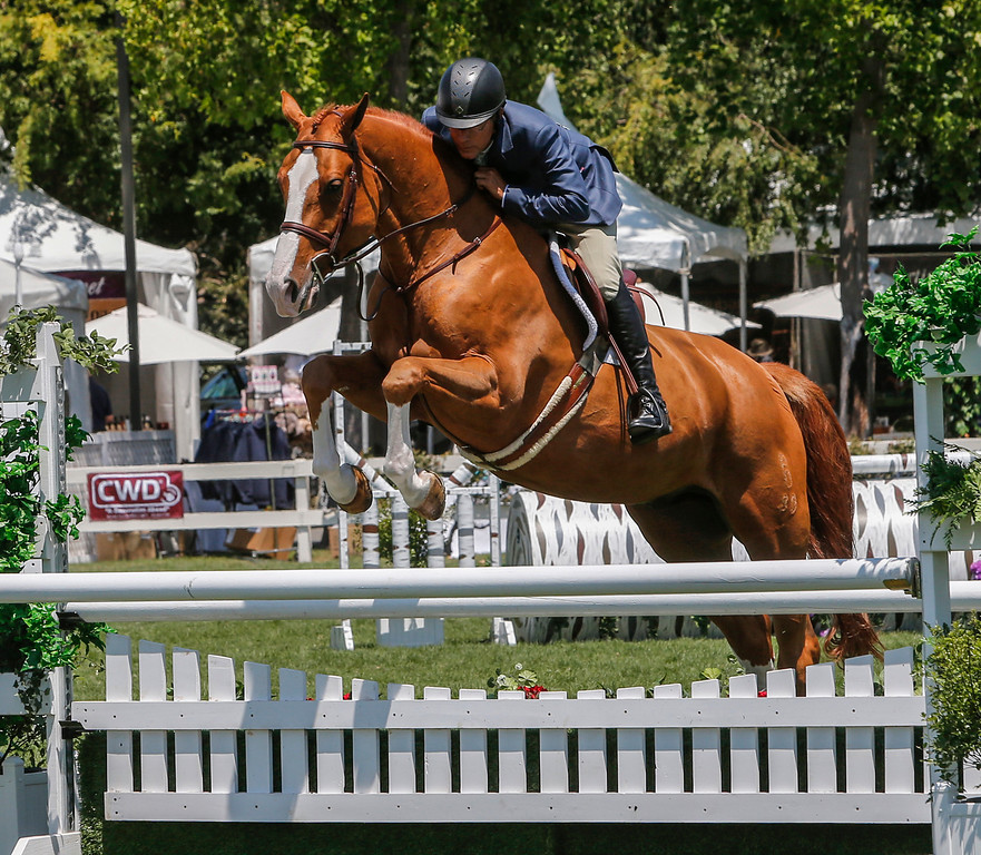 . John French, riding Quinnus, performs in the Hunter competition at the 43 annual Menlo Charity Horse Show at the Menlo Circus Club. (John Green/Bay Area News Group)