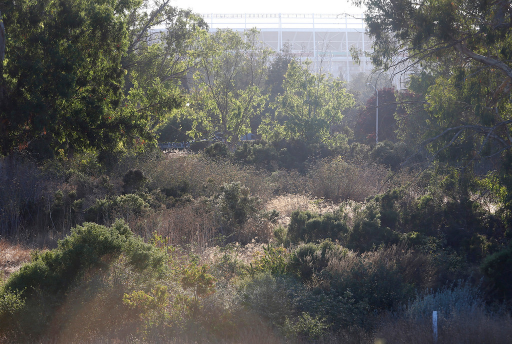. The future stadium of the San Francisco 49ers can be seen above the Ulistac Natural Area in Santa Clara, Calif. on Thursday, Sept. 19, 2013.  The 49ers and the city of Santa Clara are proposing to develop part of a 40-acre natural open space into soccer fields to make way for extra parking next to the new stadium.  This specific area of Ulistac would be replaced with proposed soccer fields.  (Nhat V. Meyer/Bay Area News Group)