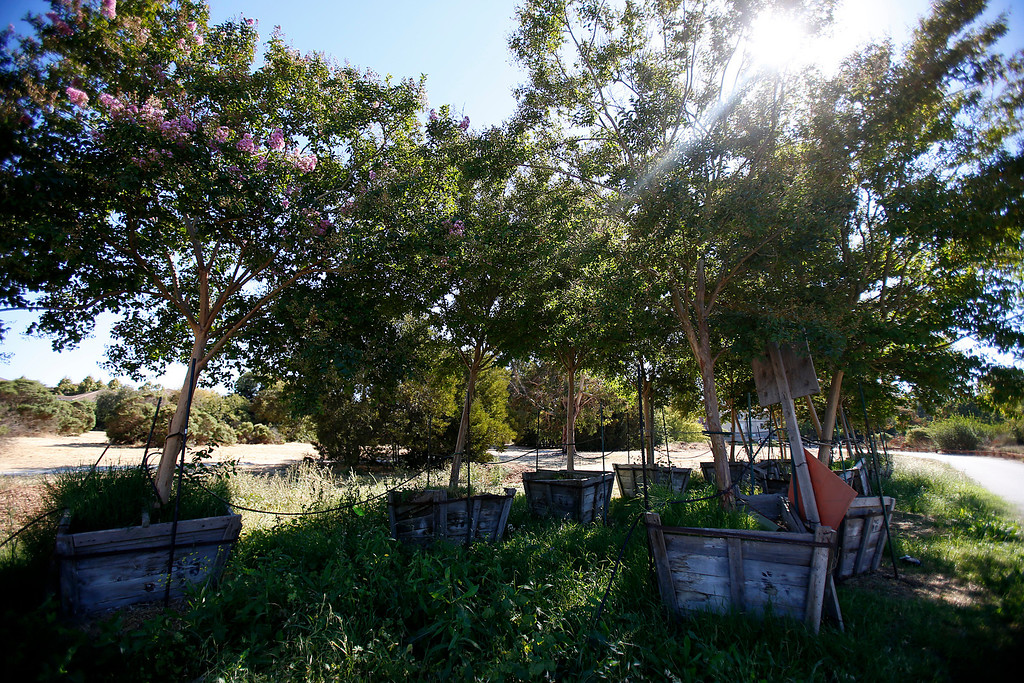 . Unplanted trees at the Ulistac Natural Area in Santa Clara, Calif. on Thursday, Sept. 19, 2013.  The 49ers and the city of Santa Clara are proposing to develop part of a 40-acre natural open space into soccer fields to make way for extra parking next to the new stadium.  (Nhat V. Meyer/Bay Area News Group)