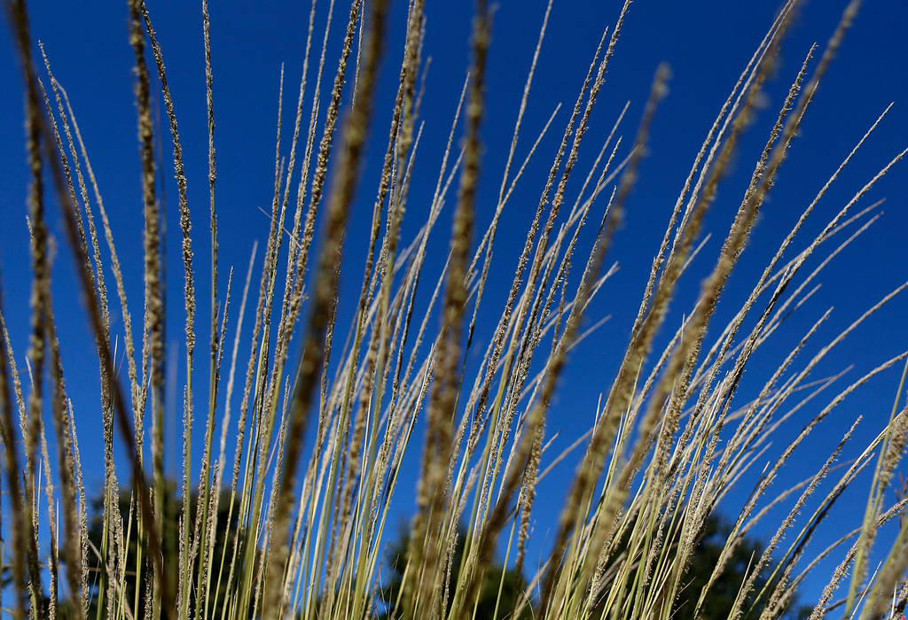 . The Ulistac Natural Area in Santa Clara, Calif. on Thursday, Sept. 19, 2013.  The 49ers and the city of Santa Clara are proposing to develop part of a 40-acre natural open space into soccer fields to make way for extra parking next to the new stadium.  (Nhat V. Meyer/Bay Area News Group)