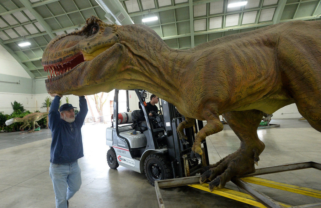 """. Ken DiScala, of Livermore, who is the mechanic, electrician and robotic expert for the Jurassic Quest exhibit and forklift driver Kyle Warner, of Tri-Cities, Washington, unload a Tyrannosaurus Rex from a trailer as they prepare for an event held this weekend at the Alameda County Fairgrounds in Pleasanton, Calif., on Thursday, Feb. 6, 2014. The indoor exhibit features  life-size, ultra-realistic animatronic dinosaurs from the Jurassic, Triassic and Cretaceous periods. Visitors can interact with the dinosaurs and learn about them and even ride a few. There will be a T-Rex and Triceratops fossil digs where young paleontologists can uncover long hidden dinosaurs bones. Their is also a \""""Dino Bounce\"""" children\'s play area with several, towering, dinosaur theme inflatable mazes. (Doug Duran/Bay Area News Group)"""