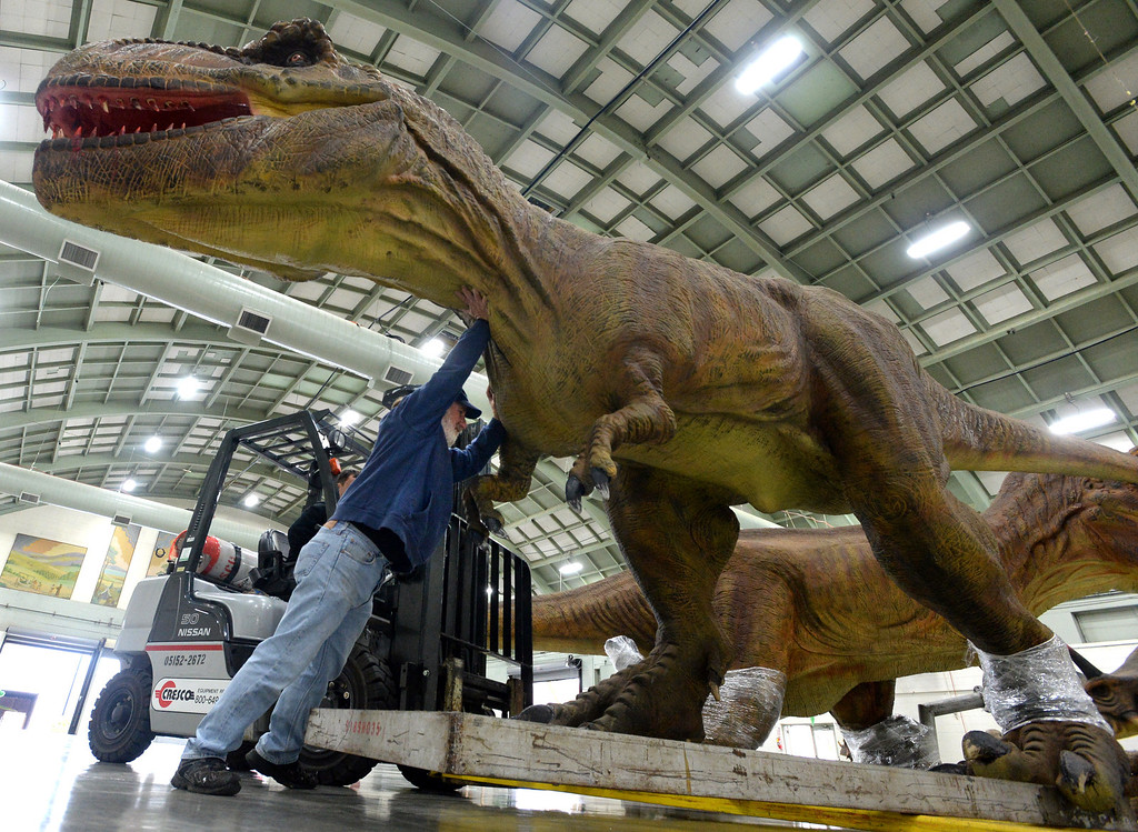 """. Ken DiScala, 60, of Livermore, who is in charge of mechanics, electrical work and robotics for the Jurassic Quest exhibit helps move a Tyrannosaurus Rex into position in preparation for an event held this weekend at the Alameda County Fairgrounds in Pleasanton, Calif., on Thursday, Feb. 6, 2014. The indoor exhibit features  life-size, ultra-realistic animatronic dinosaurs from the Jurassic, Triassic and Cretaceous periods. Visitors can interact with the dinosaurs and learn about them and even ride a few. There will be a T-Rex and Triceratops fossil digs where young paleontologists can uncover long hidden dinosaurs bones. Their is also a \""""Dino Bounce\"""" children\'s play area with several, towering, dinosaur theme inflatable mazes. (Doug Duran/Bay Area News Group)"""