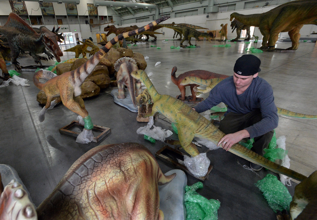""". Richard Currin, of Bend, Oregon, takes protective wrapping off dinosaurs in preparation for the Jurassic Quest exhibit held this weekend at the Alameda County Fairgrounds in Pleasanton, Calif., on Thursday, Feb. 6, 2014. The indoor exhibit features  life-size, ultra-realistic animatronic dinosaurs from the Jurassic, Triassic and Cretaceous periods. Visitors can interact with the dinosaurs and learn about them and even ride a few. There will be a T-Rex and Triceratops fossil digs where young paleontologists can uncover long hidden dinosaurs bones. Their is also a \""""Dino Bounce\"""" children\'s play area with several, towering, dinosaur theme inflatable mazes. (Doug Duran/Bay Area News Group)"""