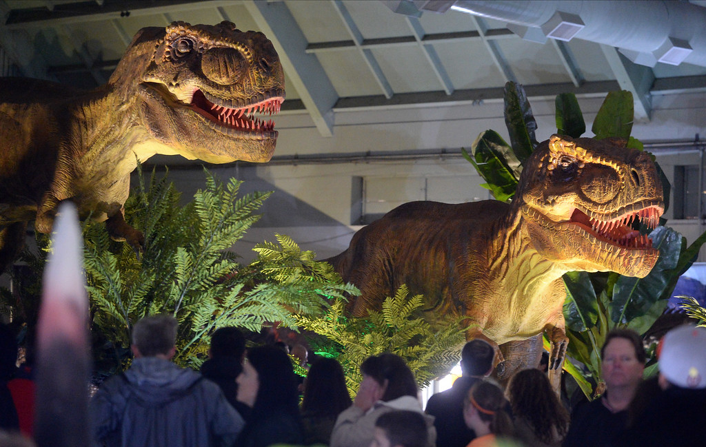""". People look at two animatronic Tyrannosaurus Rexs on display at the Jurassic Quest event held this weekend at the Alameda County Fairgrounds in Pleasanton, Calif., on Saturday, Feb. 8, 2014. The indoor exhibit features  life-size, realistic animatronic dinosaurs from the Jurassic, Triassic and Cretaceous periods. Visitors can interact with the dinosaurs and learn about them and even ride a few. There will be a T-Rex and Triceratops fossil digs where young paleontologists can uncover long hidden dinosaurs bones. Their is also a \""""Dino Bounce\"""" children\'s play area with several, towering, dinosaur theme inflatable mazes. (Doug Duran/Bay Area News Group)"""