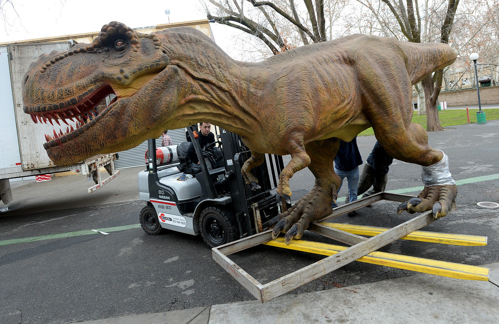 """. Forklift driver Kyle Warner, of Tri-Cities, Washington, moves a Tyrannosaurus Rex into an exhibition hall in preparation for the Jurassic Quest held this weekend at the Alameda County Fairgrounds in Pleasanton, Calif., on Thursday, Feb. 6, 2014. The indoor exhibit features  life-size, ultra-realistic animatronic dinosaurs from the Jurassic, Triassic and Cretaceous periods. Visitors can interact with the dinosaurs and learn about them and even ride a few. There will be a T-Rex and Triceratops fossil digs where young paleontologists can uncover long hidden dinosaurs bones. Their is also a \""""Dino Bounce\"""" children\'s play area with several, towering, dinosaur theme inflatable mazes. (Doug Duran/Bay Area News Group)"""