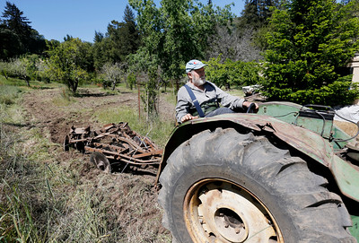 Robert Criswell, 71, drags a disc with his old tractor to create a fire break around his land at the Black Road Christmas Tree Farms in Los Gatos, Calif., on Thursday, April 16, 2015. The continued drought conditions has residents and businesses like Criswell's concerned as fire season comes earlier than normal. Criswell was born and raised on the farm. (Gary Reyes/Bay Area News Group)