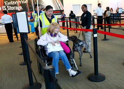 Gera, of the TSA K9 team, sniffs a passenger at the security checkpoint in Terminal B at Mineta San Jose International Airport in San Jose, Calif., on Tuesday, April 12, 2016. A nationwide shortage of security personnel and the higher security level following the Belgium terrorist attacks has caused longer than usual boarding times. (Gary Reyes/Bay Area News Group)
