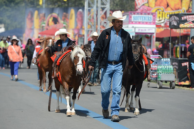 A parade of miniature horses are paraded around the fairgrounds at the Alameda County Fair at the Alameda County Fairgrounds in Pleasanton, Calif., on Wednesday, June 15, 2016. The fair, which opened on Wednesday with $1day, will run through July 4th. Check their website for hours and days of operation. (Dan Honda/Bay Area News Group)