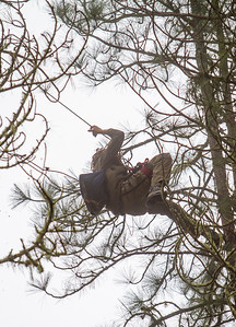 Martin Katz moving through the stand of pine trees using a rope and pulley system strung between the trees. He used this network to extend the time it took to capture him. The SWAT officers eventually cut this network and confined him to one tree. Photo by Steve Eberhard