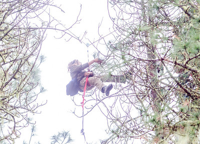 Katz continues moving through the trees until the CHP traps the two tree sitters in one tree. Photo by Steve Eberhard