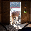 Indian rock stables 8