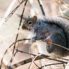 2 21 20 Lynn squirrel standalone 4