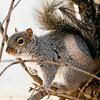 2 21 20 Lynn squirrel standalone 3