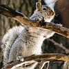 2 21 20 Lynn squirrel standalone