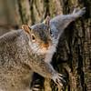 2 21 20 Lynn squirrel standalone 1