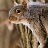 2 21 20 Lynn squirrel standalone 2