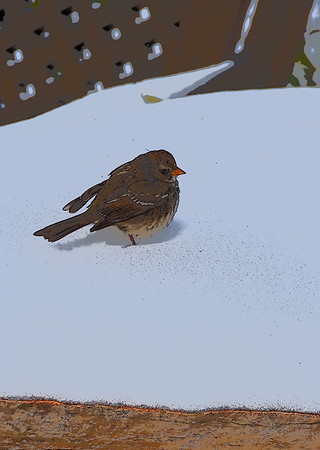 finch in winter