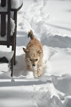 Izzy in winter