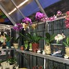 Orchid display, Arcadia Glass House, main floor