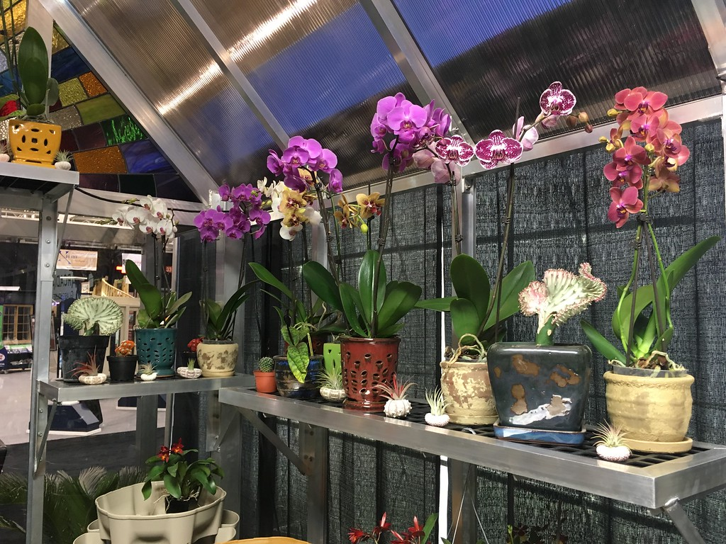 . Orchid display, Arcadia Glass House, main floor