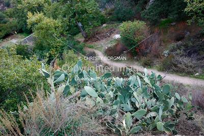Sam Merrill Trail