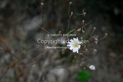 Flower on the Sam Merrill Trail
