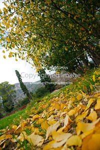 Fall foliage on the Cobb Estate