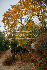 Fall foliage at the Echo Mountain resort ruins