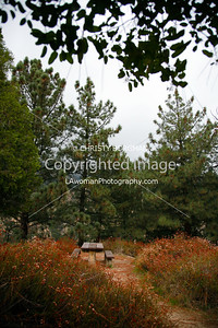 Picnic area at the Echo Mountain resort ruins