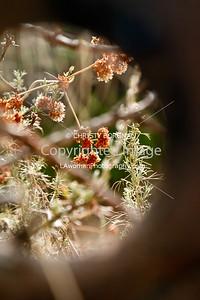 Flowers on the Sam Merrill Trail