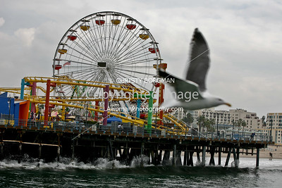 Santa Monica Pier amusements and bird fly by