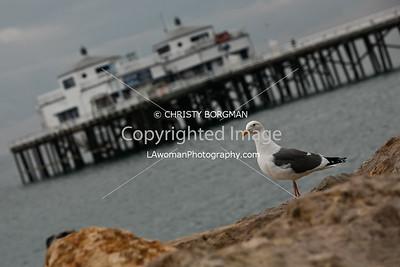 Bird and Malibu Pier