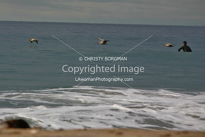 Birds and surfer at Zuma Beach