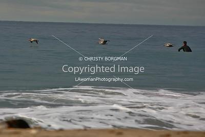 Birds and surfer at Zuma Beach