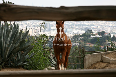 Horse at Runyon Canyon