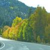 Highway Leaves 02