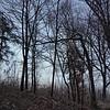 031521 JEH brushfire 14